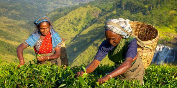 Tee järele lõhnav Sri Lanka