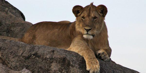 Tansaania safari & rannapuhkus Sansibaril