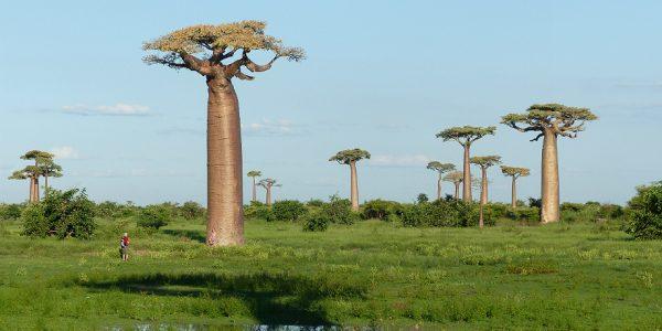 Madagaskari ringreis - Ifaty rannapuhkus