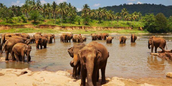 Elevandisaar Sri Lanka