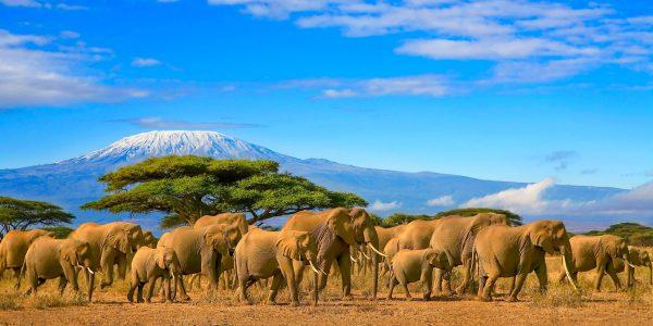 Kaks Kanget soovitavad: Tansaania ja Sansibar