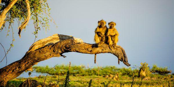 Botswana – Aafrika A & B