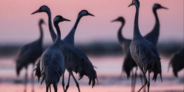 Linnuvaatlusreis Rein Kuresooga